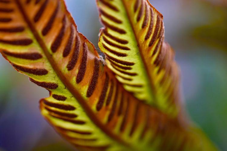 Close-up of leaf on plant