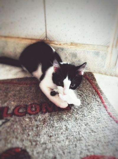 TheCatLife 😸 Catworld Petstagram Cats His Toy