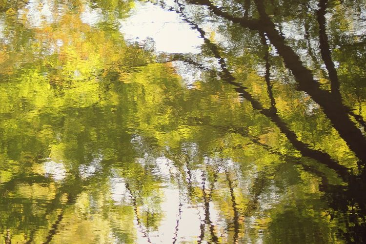 Looking into the lake | Tree Nature Reflection Green Color No People Full Frame Water Backgrounds Beauty In Nature Close-up Low Angle View Quite Moments Personal Perspective Still Life Silhouette Sunlight Japan Through My Eyes Tokyo Japan |