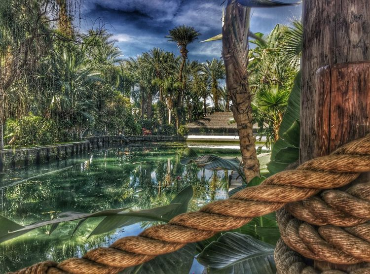Timages Medjool Medjoollake Coachella2016 Coachella Empirepoloclub Hanging Out Taking Photos Check This Out Hello World Relaxing Hi! Enjoying Life Palms Palm Trees Tree_collection  Rope