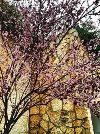 Traveling Hello World Walking Around Sakura