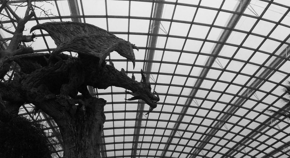 Welcome To Black Dragon Lines Blackandwhite Bwphotography Wood Dragon Art Sculpture Singapore Shades Of Grey