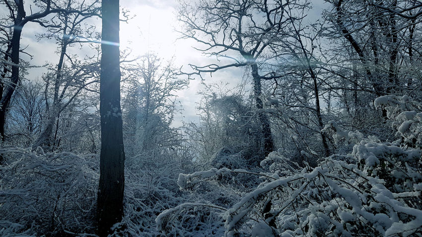 Photography Fotografie Foto Natur Life Welt Himmel Landscape Landschaft Sun Forest Wald Winterforest Winterwald Winter Cold Temperature Weather Snow Tree Nature Backgrounds No People Day Forest Beauty In Nature Snowflake Sky Frozen Outdoors