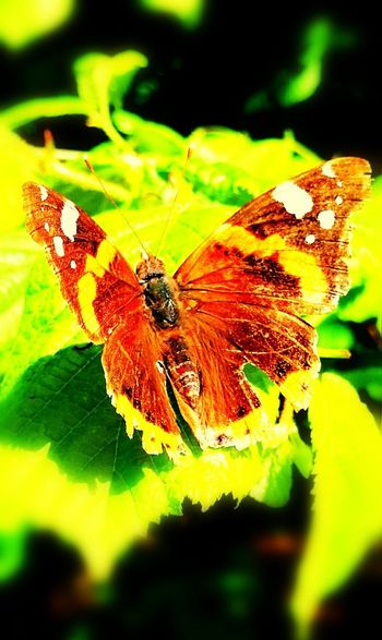 Papillon Betterfly Nature Insect Colors Gros Plan Zoom The Great Outdoors - 2017 EyeEm Awards
