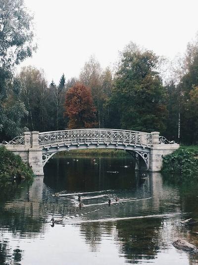 Gatchina Park Ducks Forest Nature Autumn Colors Autumn Wonderful View Autumnal Mood Ownphotography Bridge