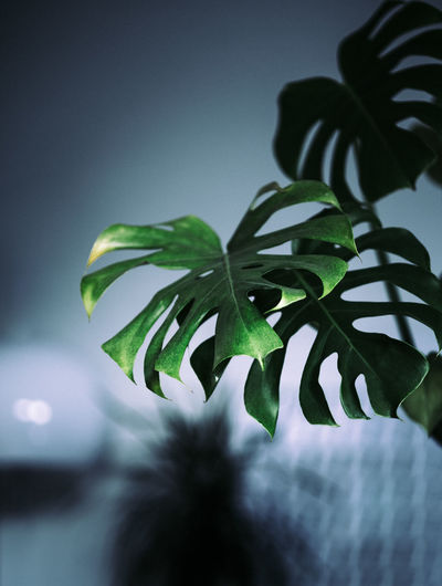City Life Evening Light Interior Views Interior Decorating Lifestyle Urban Lifestyle Urban Nature Beauty In Nature Close-up Fragility Freshness Green Color Greenery Growth Indoors  Interior Interior Design Leaf Light And Shadow Minimal Minimalobsession Nature Night Plant