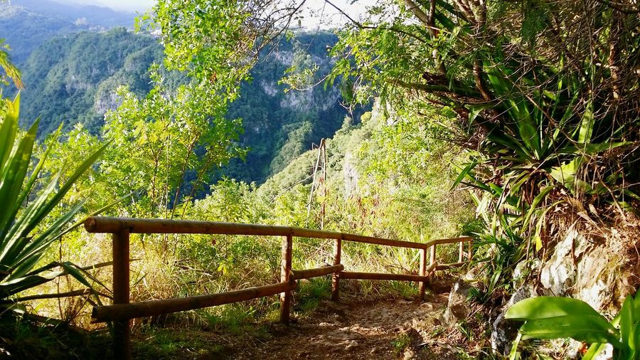 Sentier Dassy Reunion Island EyeEmNewHere Trail Running Sentier Stairs Trees Mountain Sky Countryside Calm Tranquility Green
