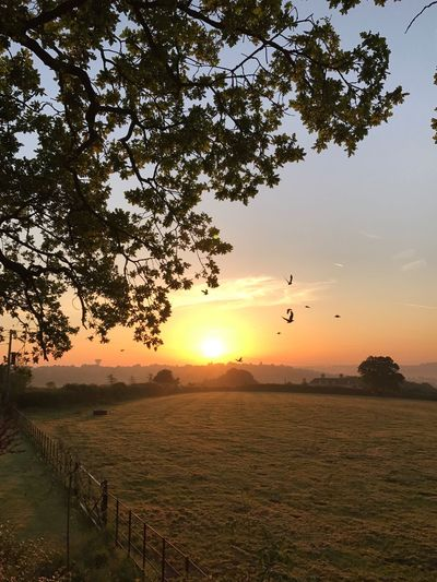 Sunrises in England The Great Outdoors - 2017 EyeEm Awards Sunrise Birds Farm English Countryside Countryside Sun Nature Beauty In Nature Tranquil Scene Scenics Sky Landscape Tree Sunlight Tranquility Field Growth Outdoors No People Flying Grass Animal Themes Bird Day