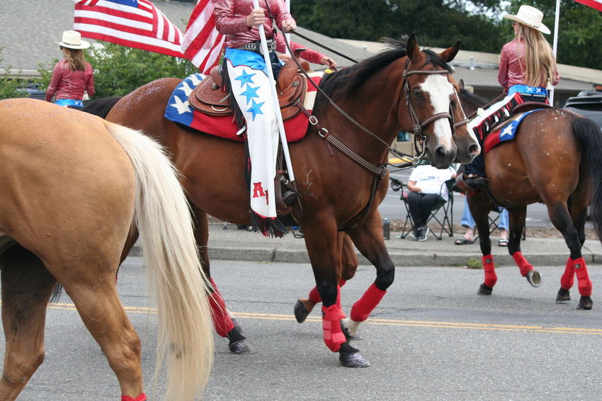 4th Of July 2016 4th Of July Parade Bridle Brown Celebration Close-up Day Domestic Animals Focus On Foreground Herbivorous Horse Horses Lifestyles Livestock Mammal Outdoors Patriotism Working Animal Adapted To The City Women Around The World