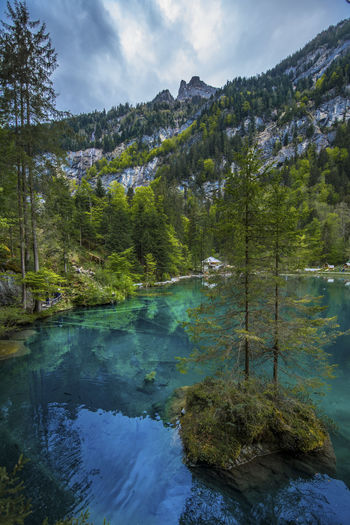 Schweiz Beauty In Nature Blausee Cloud - Sky Coniferous Tree Day Environment Growth Lake Land Mountain Nature No People Non-urban Scene Outdoors Plant Reflection Scenics - Nature Sky Tranquil Scene Tranquility Tree Water