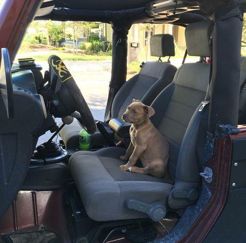 Car Vehicle Interior Dog Doglover Dog Life PuppyLove Puppy Puppydog Jeep Jeep Wrangler  Jeep Life