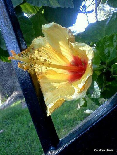 Nature On Your Doorstep Flowers, Nature And Beauty The Great Outdoors - 2015 EyeEm Awards Flower Photography Naturephotography Yellow Flower EyeEm Best Shots EyeEm Gallery Urban Gardening Flowerporn