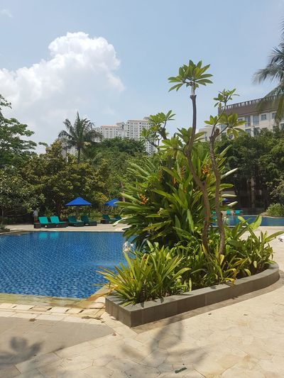 Poolside Bestoftheday INDONESIA Culture And Tradition Coconut Trees Hotel View Agrarculture Cloud - Sky Plant Sand Blue Palm Tree Tree No People Nature Outdoors Day Water Sky Flower