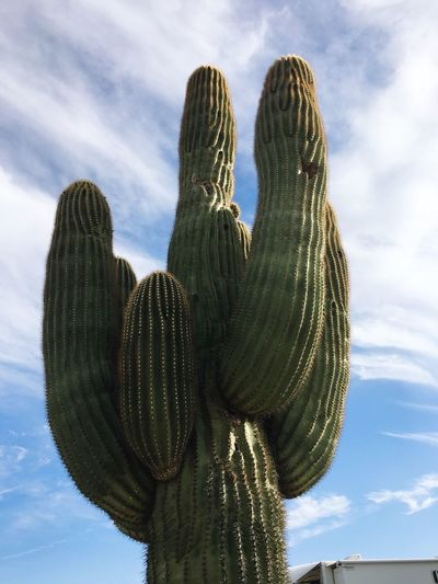 Low angle view of statue of cactus against sky