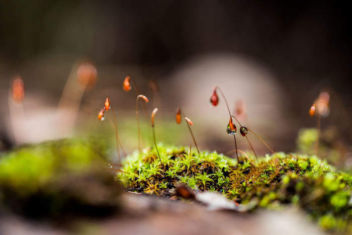 Small world Plant Nature New Life Growth Close-up Beauty Beauty In Nature Freshness Moss-covered Green Nature Miniture Photogrpahy Taking Photos Enjoying Life Relaxing
