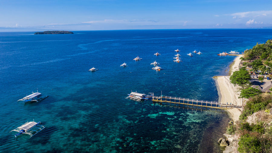 Above Adventure Aerial View Animal ASIA Background BIG Blue Boat Cebu Clear Diving Endangered  Environment Exotic Feeding  Fish Fun Giant Large Life Marine Nature Ocean Oslob Philippines Philippino Protection Rhincodon SCUBA Sea Shark Ship Snorkeling Surface Swimming Top View Tour Tourism Travel Tropical Typus Underwater Vacation Watching Water Whale Whaleshark Wide Wildlife