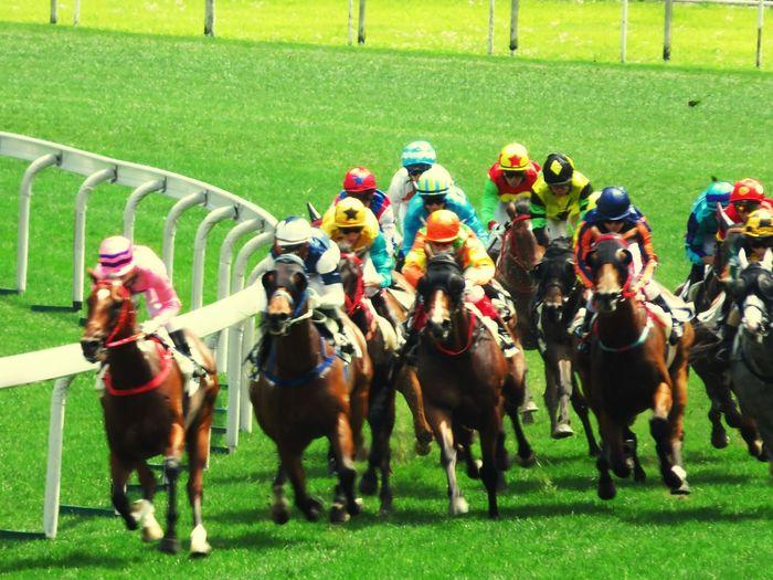 Horseracing Horserace Shatinracecourse