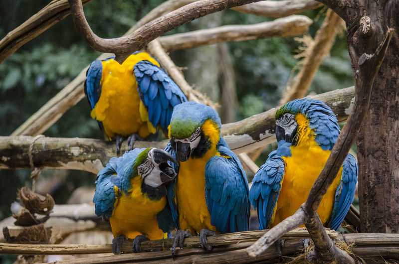 Animal Animal Family Animal Themes Animal Wildlife Animals In The Wild Bird Blue Day Group Of Animals Nature Outdoors Parrot Perching Tree Vertebrate Yellow