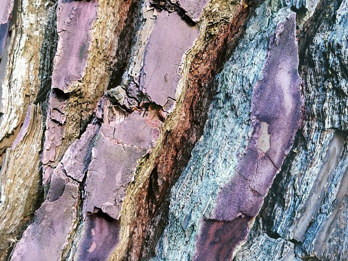 Tree Bark Beautiful Bark Textured  Full Frame Backgrounds Weathered No People Close-up Old Damaged Rough Wood - Material Tree Trunk Day Pattern Decline Trunk Deterioration Outdoors Run-down Peeling Off Metal Ruined Surfaces And Textures Structure Of Time