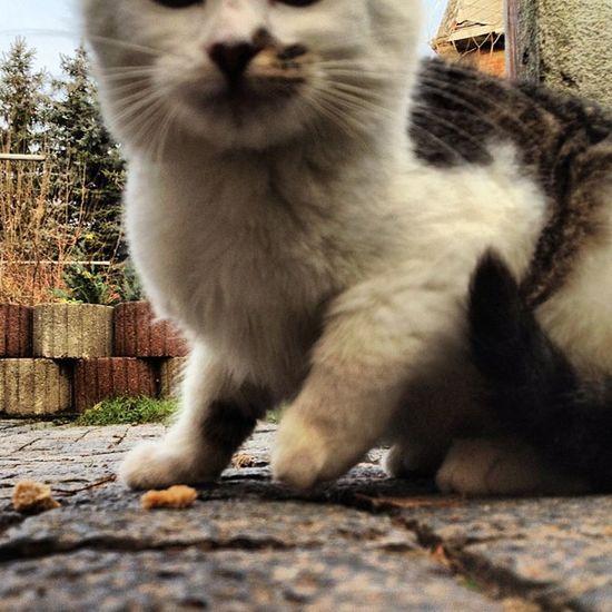 Hier, steht ihr doch drauf. #catcontent Cat Katze Catcontent Catsofinstagram Mieze Miezekatze