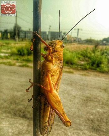 He's lost 😁 Grasshopper Grass Backgrounddefocus Indonesiaxperiaphotography Xperiaindo