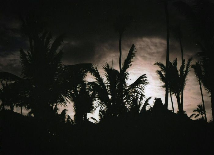 My Year My View Punta cana night Tree Silhouette Palm Tree Night Outdoors Nature Dominican Republic Punta Cana No People Sunset Summer Night