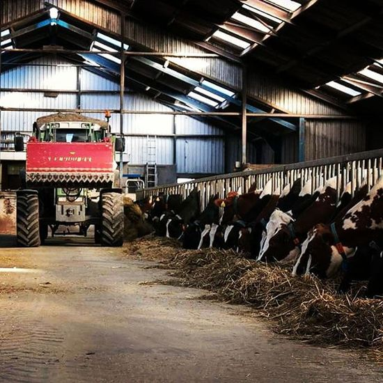 Feeding the cows, we feed eatch day our cows. It's important for the cows to get food with the most energie Cows Feeding  Fendt309c Farmer4life Farmer365