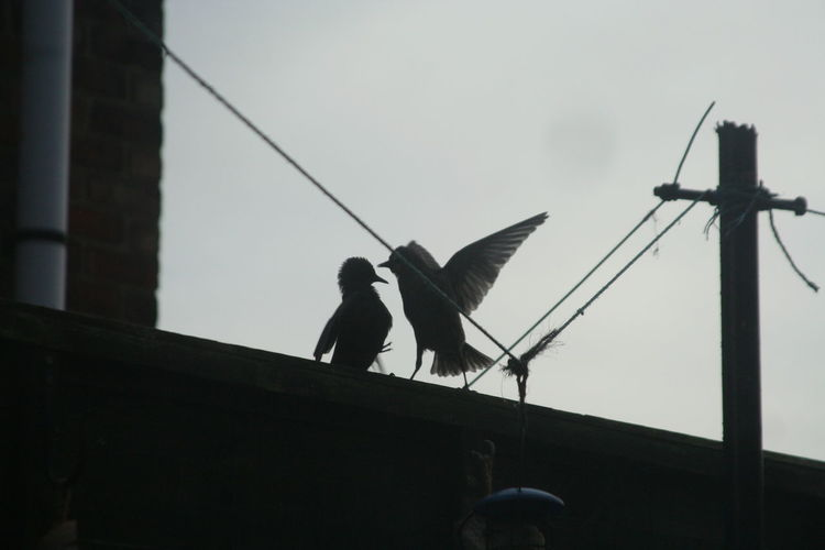 Pair of birds on roof at dusk