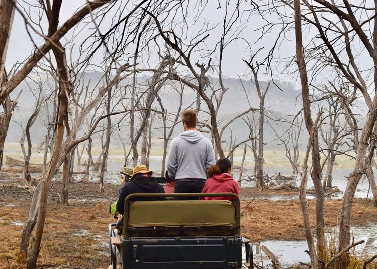 Rear View Of People In Forest For Safari Adult Adults Only Animal Themes Bare Tree Car Community Outreach Day Differing Abilities Forest Full Length National Park Nature Outdoors People Ranthambhore Rear View Safari Senior Adult Sitting Tree