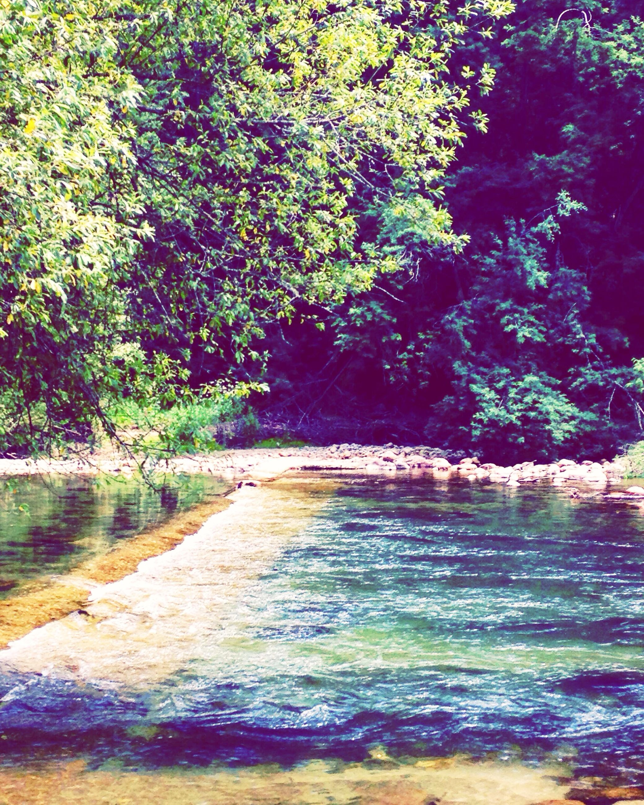 tree, water, tranquility, nature, tranquil scene, beauty in nature, growth, scenics, the way forward, green color, forest, day, outdoors, idyllic, no people, branch, plant, sunlight, river, non-urban scene