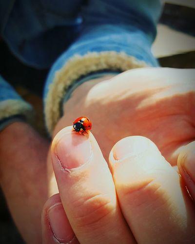 Close-up of a ladybug on finger