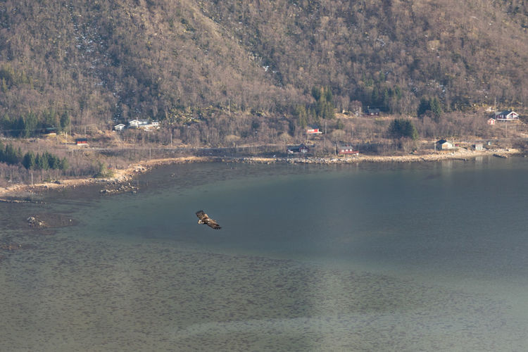 Sea eagle flying over shallow sea seen from above Knickowski Eagle - Bird Sea-eagle Mid-air One Animal Spread Wings Fjord Bay Of Water Sea High Angle View Mountain Flying Coastline Above Water Animal Animal Themes Animals In The Wild Vertebrate Animal Wildlife Bird Day Tree Tranquil Scene Nature Beauty In Nature Land Scenics - Nature No People Tranquility Waterfront Outdoors