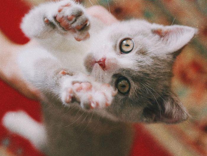 кото_фото котэ котики Котик животное животныймир животные <3 животные Animal Themes One Animal Nature Animals Photo