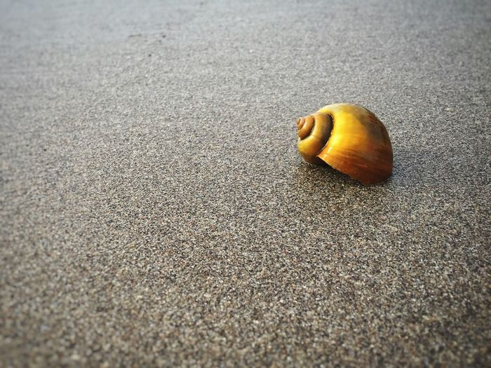 I like collecting shells on the beach Things I Like Beach Beachphotography Bali, Indonesia Baliphotography From My Point Of View Iphonephotography Perspective Tropical Travel Photography Tranquility Nature Simplicity Ladyphotographerofthemonth Beach Walk IPS2016Composition IPS2016Stilllife Q is for quiet The Essence Of Summer Colour Of Life Pivotal Ideas