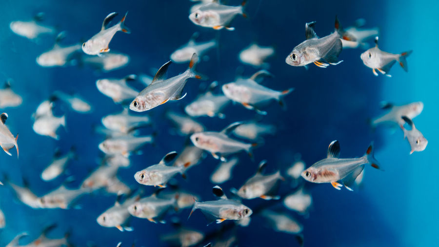 Fishes swimming in sea