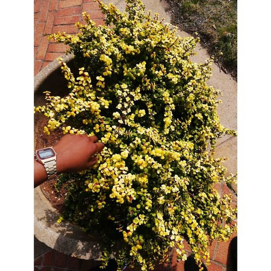 Low angle view of person holding flowering plant