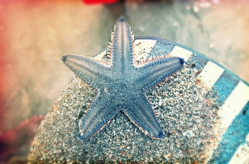 Close-Up Of Star Fish On Sand At Beach