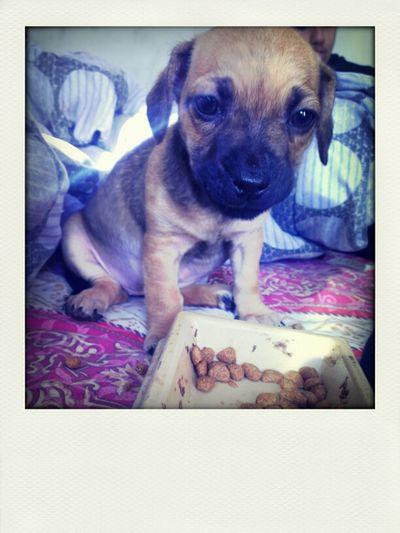 Babydaddy Got Me A New Puppy <333333