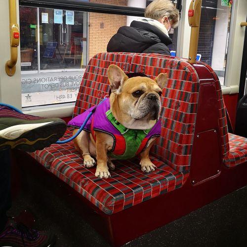 Dog sitting on seat in train