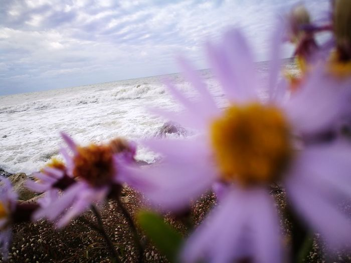 Kaspian Sea HuaweiP9 Flower Nature