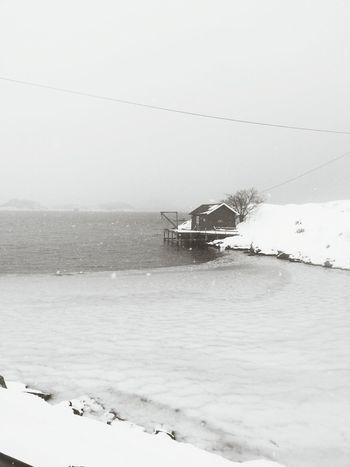Winter White By CanvasPop Snowandice Myparadise Blackandwhite