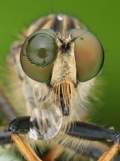 Close-up portrait of fly