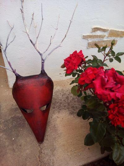 Nafarroa Oinez Nafarroa Oinez Mask Flowering Plant Flower Red Plant Beauty In Nature Nature Freshness Vulnerability  Rose - Flower No People Growth Outdoors Day Flower Head