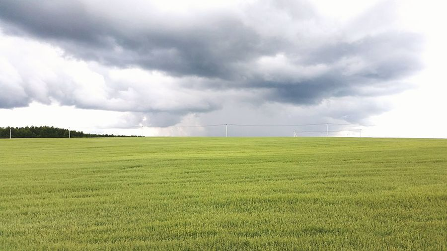 View Of Meadow On Cloudy Day