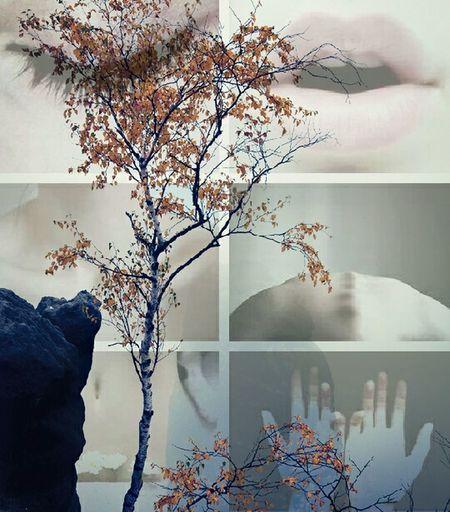 Trees EyeEm Best Edits Hipster Tree Silhouette Vintage Pleoples EyeEm Nature Lover