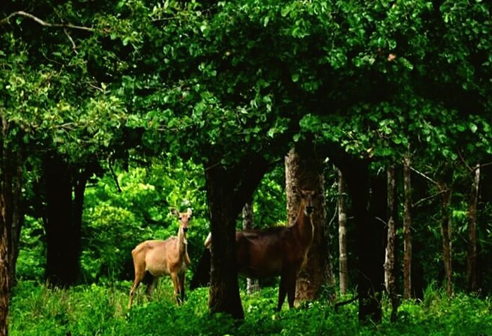 forest animal view Tree Mammal Grass Livestock Animal Themes Outdoors Nature Domestic Animals Green Color Standing Full Length Day No People Animals In The Wild Rural Scene Beauty In Nature