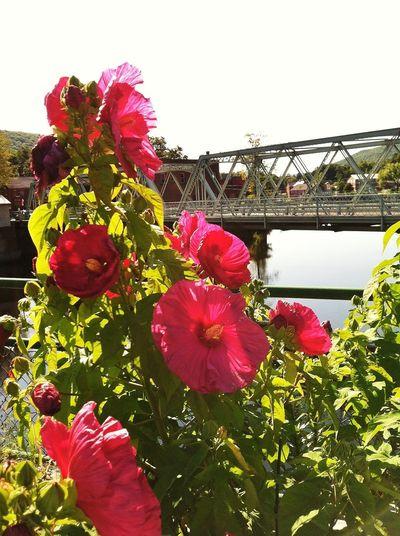 Roadtrip Flowerporn Bridge Taking Photos Streamzoofamily IPhoneography Massachusetts OpenEdit Eye4photography  Bridges