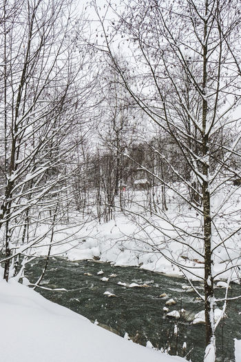 Snow Cold Temperature Winter Tree Bare Tree Plant Nature Covering Branch White Color Land Day No People Frozen Tranquility Beauty In Nature Scenics - Nature Environment Non-urban Scene Outdoors Snowing Extreme Weather Snowcapped Mountain Ditch
