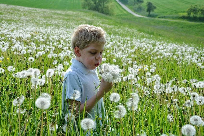 Pusten....pusten.... Grass One Person Children Only Childhood Nature Outdoors Child Blond Hair Flower Head Freshness One Boy Only Meadow; Fields Photography Dandelion Field Dandelion Dandelion Fluff, Nature, Flowers, Plants, Stem, Dandelion Collection Fun Happiness Rural Scene Real Photography Lifestyle Photography Lifestyle Real People Boy