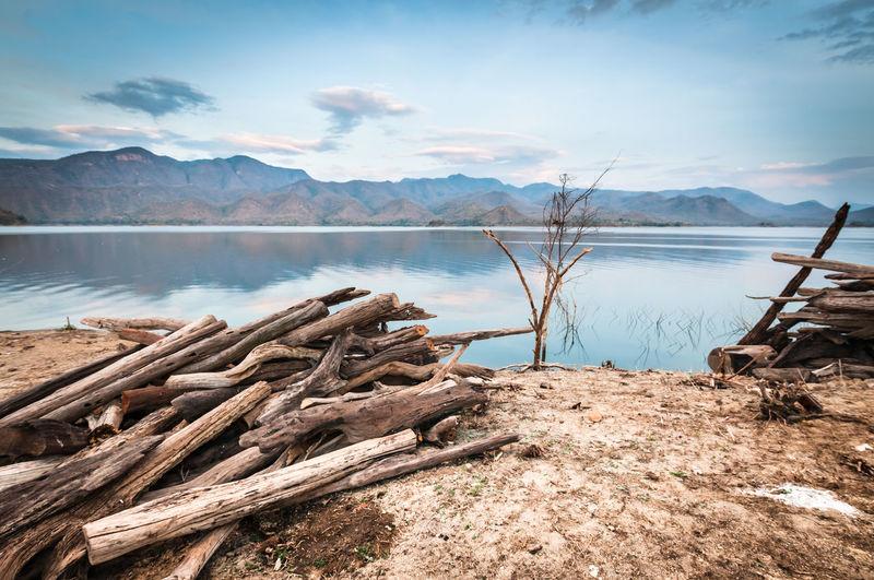 Driftwood on lakeshore against sky